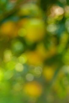 Sfondo verde naturale della foresta fuori fuoco o bokeh