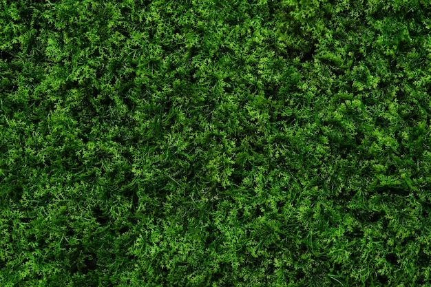 Sfondo verde natura, parete verde dalle foglie