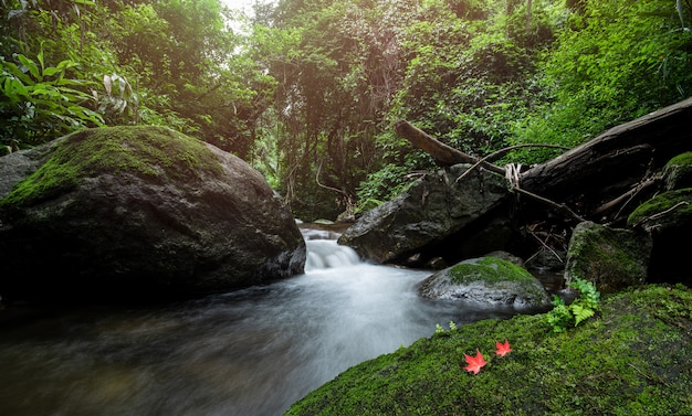 Natura verde nella giungla con piccola cascata e foglia d'acero rossa