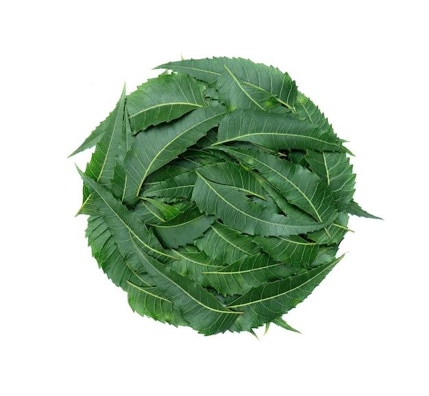 Composizione di foglie di albero di neem verde in una forma rotonda isolata su sfondo bianco