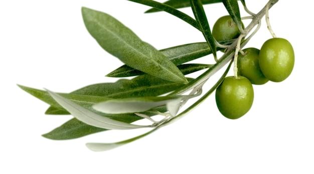 Olive verdi con un ramo su un fondo bianco