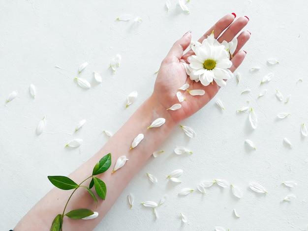 Fiore della margherita naturale cosmetici a base di erbe organiche verdi