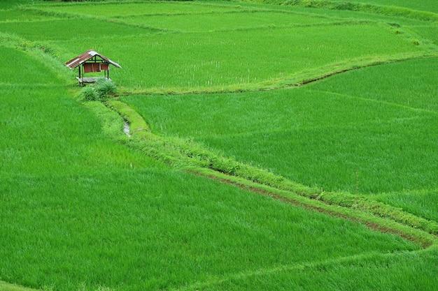 Risaia verde con un padiglione in stile rustico in thailandia