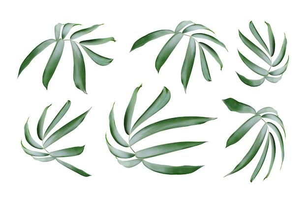 Foglia di palma verde isolata su bianco