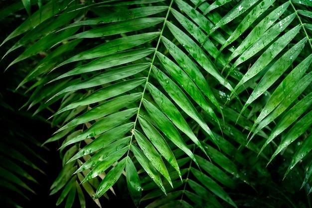 Foglie di palma verdi bagnate dopo la pioggia tropicale sfondo naturale