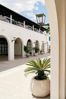 Le palme verdi crescono in vasche nel cortile di un lungo edificio bianco con archi
