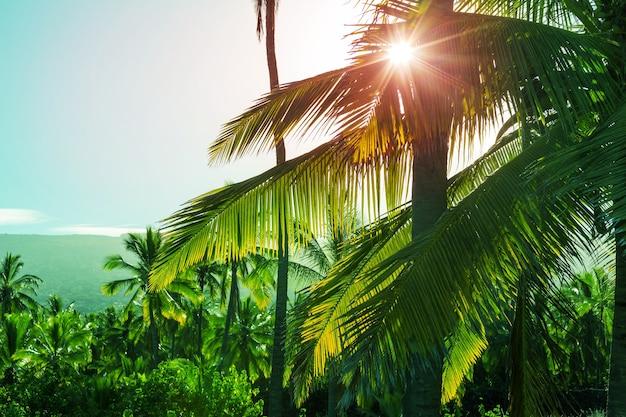 Palme verdi sulla spiaggia tropicale