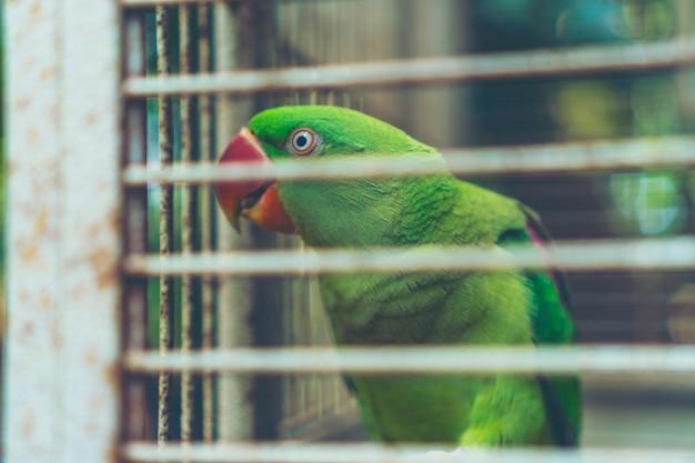 Pappagallo verde nella gabbia