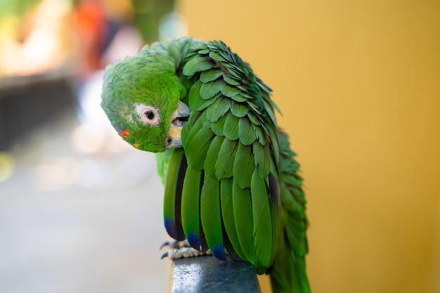 Ritratto verde del primo piano del pappagallo. parco degli uccelli, fauna selvatica
