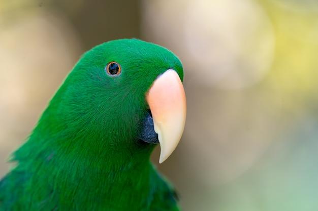 Il pappagallo verde appende sopra e sta sul ramo nella sfuocatura del bokeh della foresta