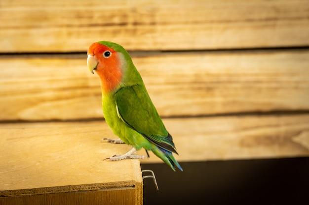 Pappagallo verde su fondo in legno