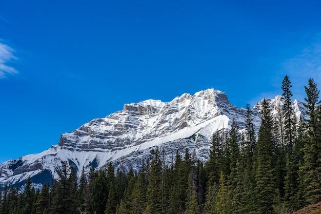 Verde foresta di pini e montagne innevate cielo azzurro e nuvole bianche sullo sfondo