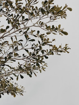 Ramo di piante verdi, foglie su muro di cemento beige neutro