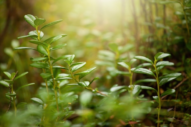 Pianta verde che cresce nella foresta alla luce del sole in background