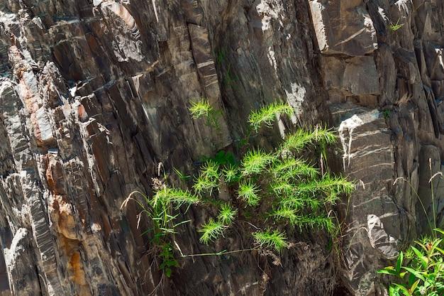 Pianta verde che cresce su una roccia di pietra