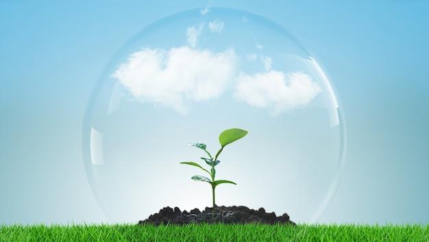 Pianta verde in crescita