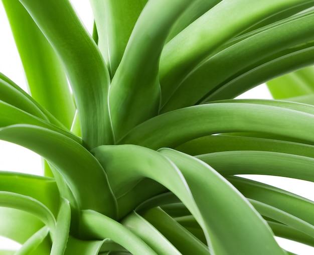 Le foglie della pianta verde si chiudono su