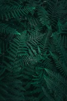 Pianta verde foglie in giardino nella stagione autunnale, sfondo verde