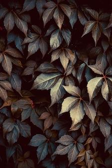La pianta verde lascia nella natura nella stagione autunnale