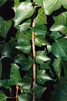 Foglie di piante verdi nella natura, sfondo verde