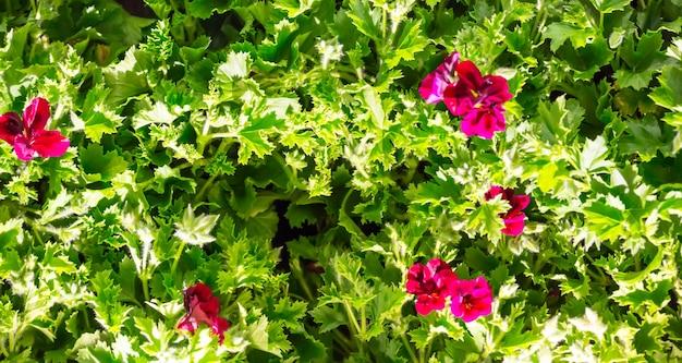 Pianta verde con sfondo di fiori rosa