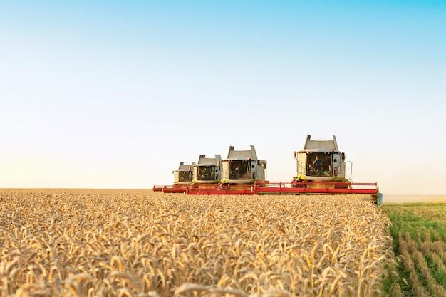 Mietitrice di lavoro funzionante rossa verde nel campo di grano