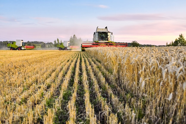 Mietitrebbia di raccolta di lavoro rosso verde nel campo di grano