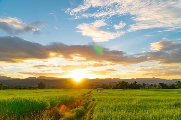 Risaie verdi durante il tramonto con il cielo delle nuvole e la luce del chiarore alla provincia tailandia di mae hong son.