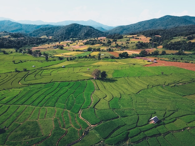 Risaie verdi dall'alto in campagna