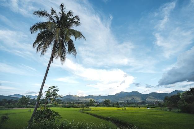 Campi di riso verdi nella stagione delle piogge in campagna