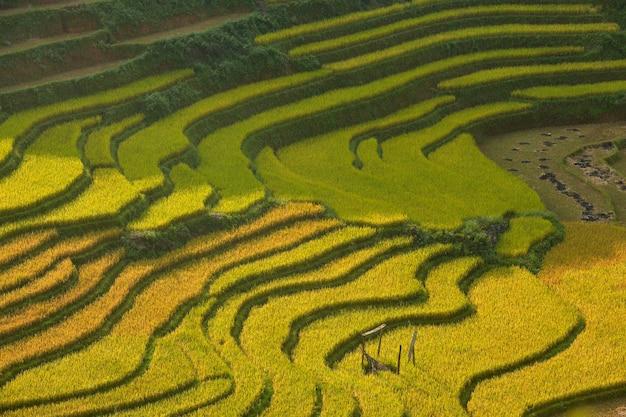 Campi di riso verde terrazzati a mu cang chai, vietnam campo di riso