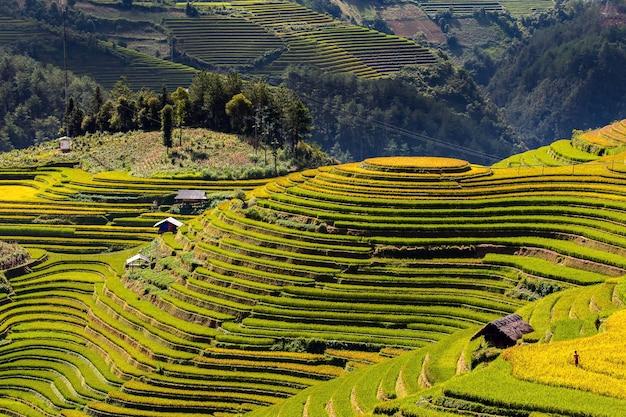 Risaie verdi su terrazzate a muchangchai, vietnam le risaie preparano il raccolto a northwest