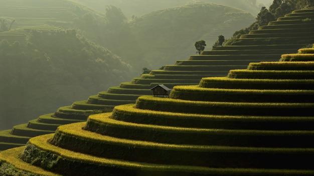 Campi di riso verde terrazzati a muchangchai, vietnam
