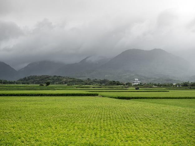 Risaie verdi, nuvole bianche, montagne di hualien, taiwan.