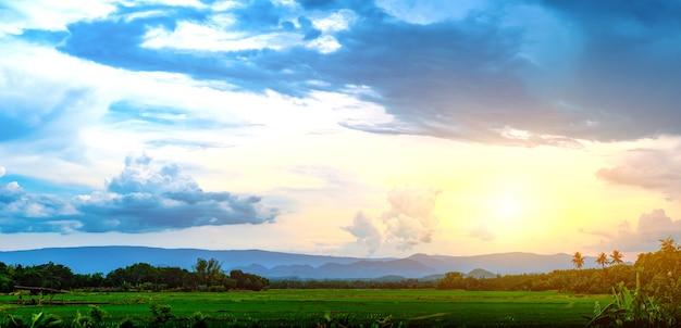 Piantine di riso verde in un campo di risone con un bel cielo e nuvole