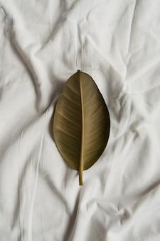 Foglia di pianta di gomma verde su lino bianco