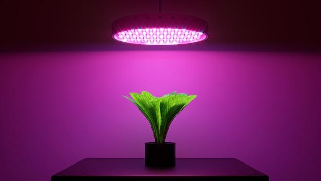 La pianta di insalata verde sotto il led coltiva la luce