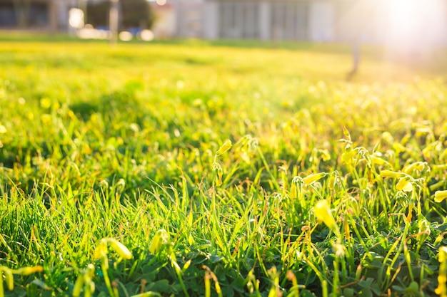 Erba verde primaverile sullo sfondo della luce del sole