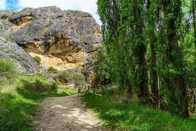 Paesaggio primaverile verde con alberi ad alto fusto e pareti di roccia con un sentiero sterrato tra la vegetazione. fiume duratãƒâ³n, sepulveda, segovia. spagna.
