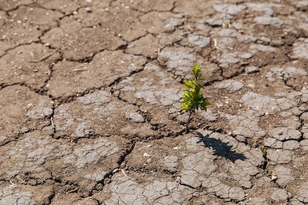 Un germoglio verde germoglia dalla terra secca e screpolata