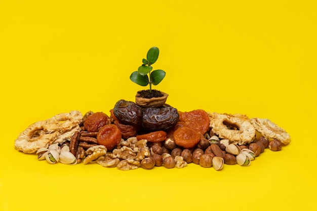 Germoglio verde in un guscio di noce su un mix di frutta secca e noci su uno sfondo giallo. simboli della festa ebraica di tu bishvat (b'shevat)