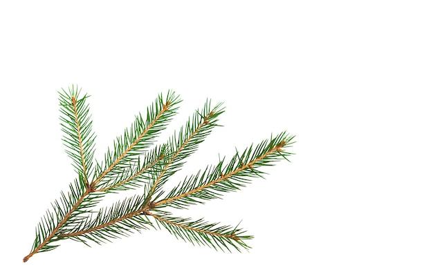 Ramo attillato verde con il primo piano degli aghi corti su un fondo bianco, isolare. albero di natale, decorazione. anno nuovo, natale. conifera sempreverde, abete rosso comune