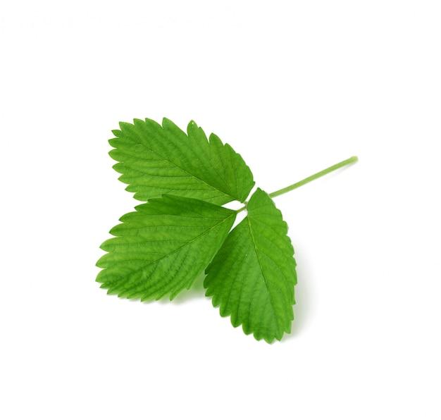 Foglia verde della fragola isolata su fondo bianco