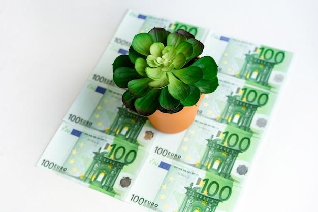 Il fiore verde succulento sta sulle banconote in euro verdi su uno spazio bianco, un posto per spazi di lavoro