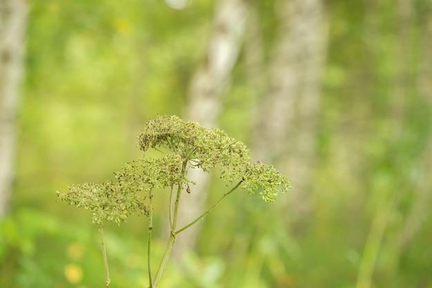 Struttura astratta del fogliame verde di estate con le foglie e la sfuocatura dello sfondo.
