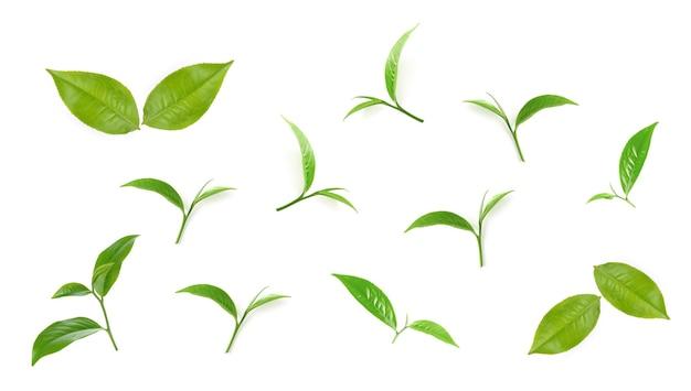 Accumulazione della foglia di tè verde isolata su priorità bassa bianca.
