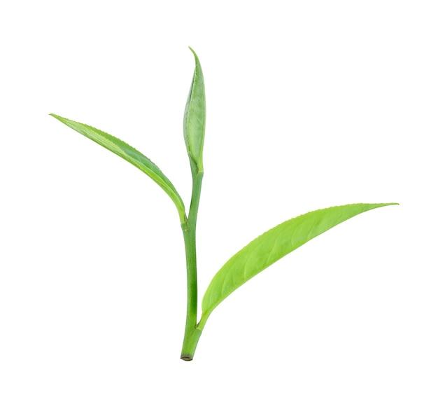 Foglia di tè verde isolato su sfondo bianco