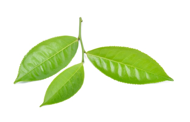 Foglia di tè verde isolata