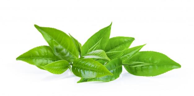 Foglia di tè verde su bianco