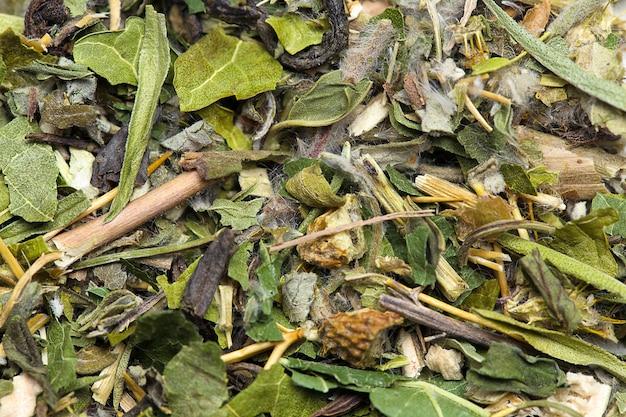 Foglie di tè verde close up texture di sfondo
